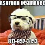 Ashford Insurance Puppy