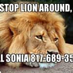Stop Lion Around